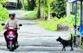 Tahun 2016 Distanak Banyuasin Fokus Berantas Rabies Di Kabupaten Banyuasin.
