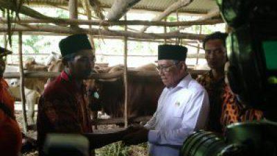 Wakil Bupati Banyuasin Serahkan Sapi berjenis Brahman Cross