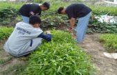 Integrasi Peternakan dan Hortikultura oleh SMK PP Negeri Sembawa