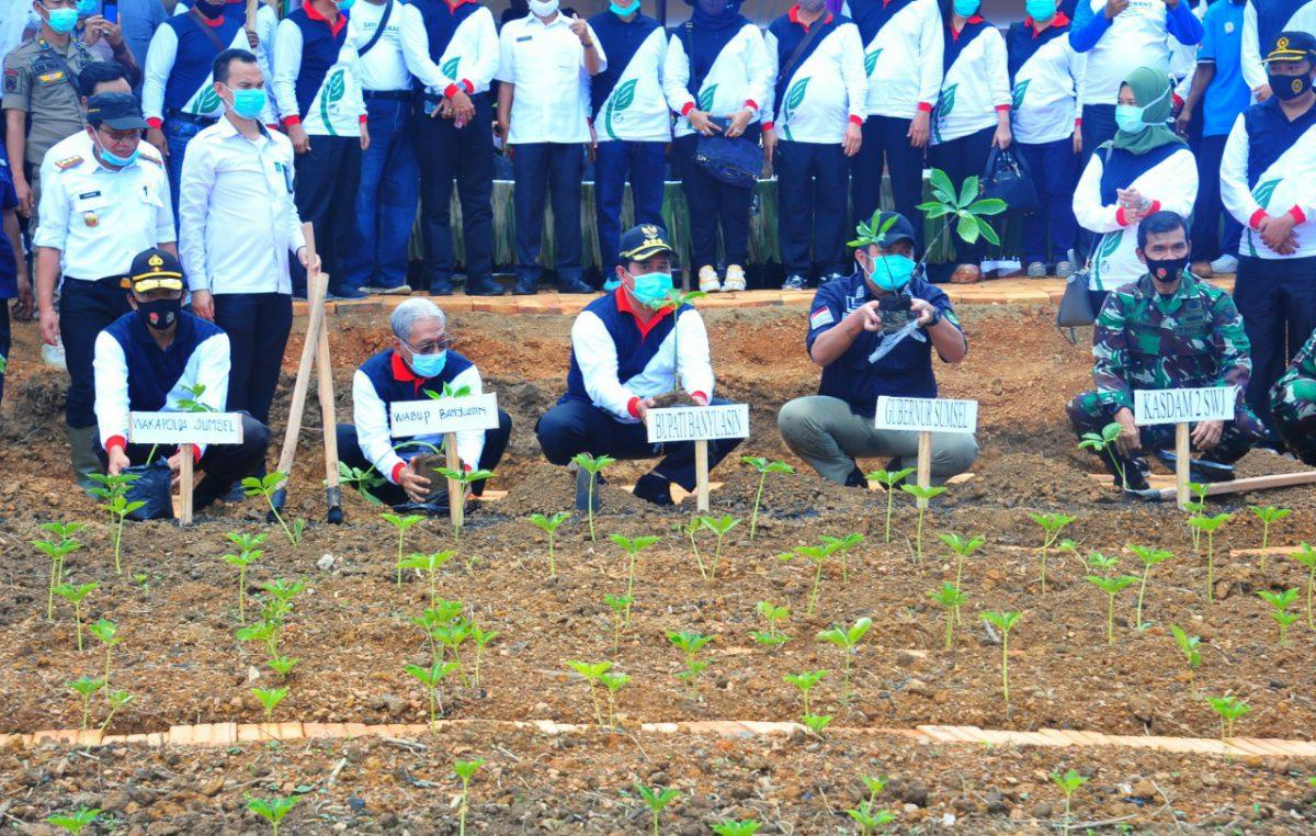 Bupati Banyuasin: Tingkatkan Bidang Pertanian, Tanaman Porang Dibudidayakan Di Banyuasin