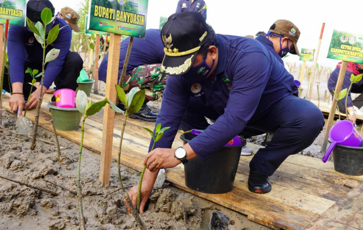 Bangkitkan Ekonomi Masyarakat Pesisir, Pemkab Banyuasin Kerjasama Tanam Pohon Mangrove